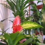 Proyecto de fitodesalación mediante plantas resistentes a la sal