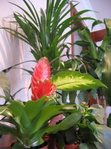 Análisis de plantas y vegetales