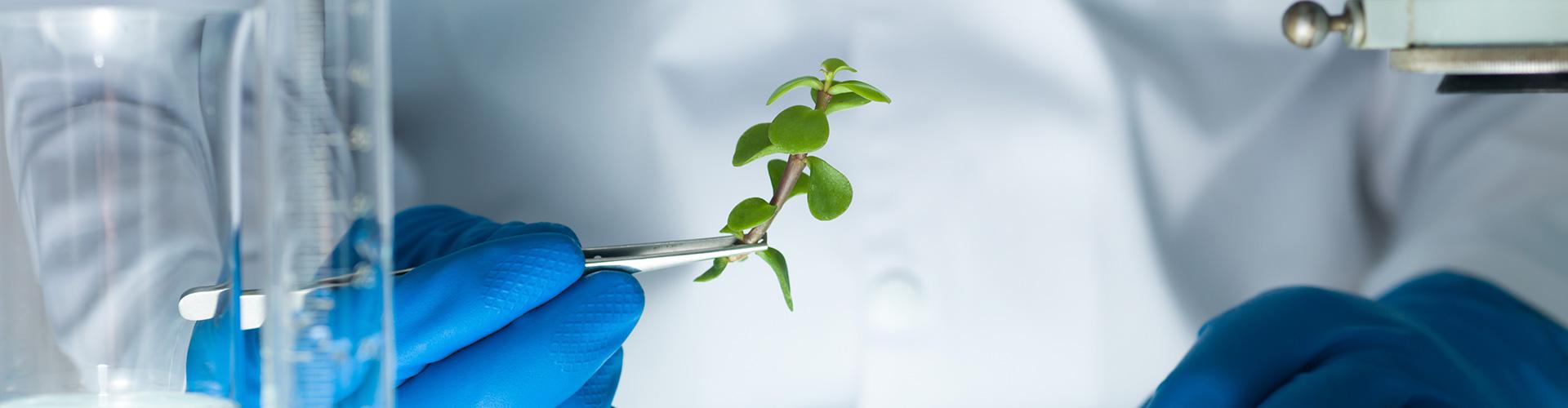 ramita de una planta cogida con pinzas