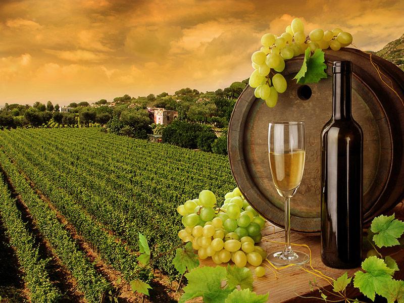 Curso de la uva a la botella